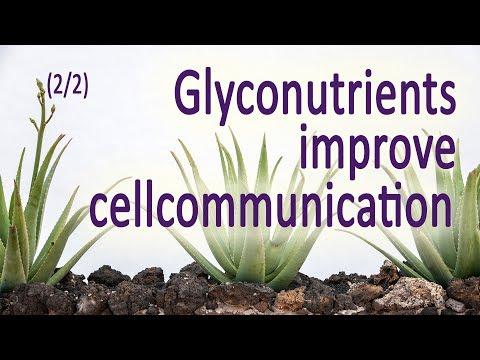 Glykonährstoffe (2/2) - Lukas Waldmann