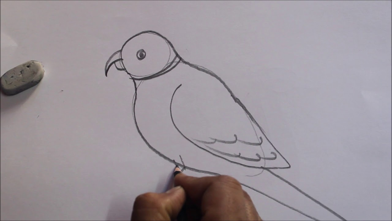 Parrot pencil sketch step by stepeasy simple tutorials amit art classes