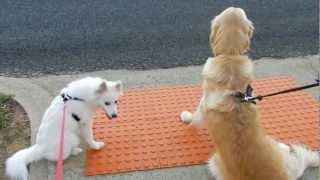 Teach Your Dog To Safely Cross The Road