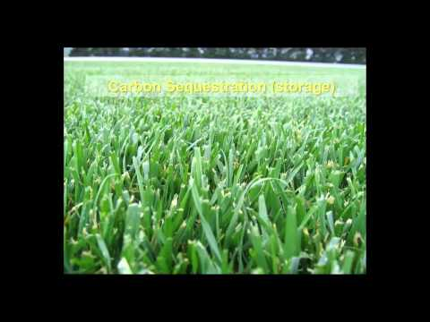 An Overview of Sports Turf Management