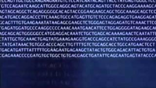 Wonders of Creation-DNA is a code from intelligence