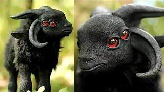 7 ऐसे जानवर जो इस दुनिया के नहीं लगते लेकिन है7 methycal creature exist in real life,strange animals