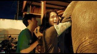 ตรวจสุขภาพช้าง กับพี่หมอเบน และ ทีมสัตวแพทย์โรงพยาบาลสัตว์พนาลัย