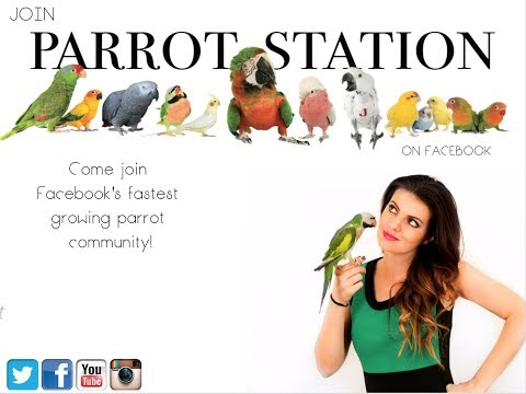 Live Parront Tip Tuesday | MARLENE MC'COHEN | PARROT TALK