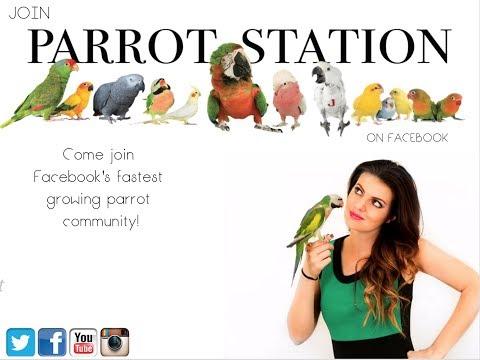 Live Parront Tip Tuesday  MARLENE MC'COHEN  PARROT TALK