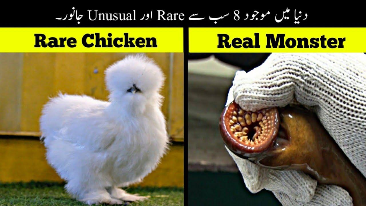 8 Most Rare And Unusual Animals   دنیا کے سب سے انوکھے جانور   Haider Tv