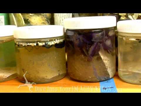 Project Kaisei - Miriam Goldstein Talks Plastic  - The Garbage Patch - Scripps