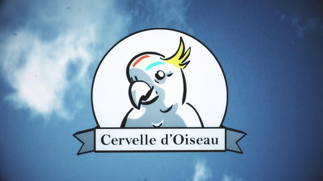 CV Vidéo Sébastien Moro / Cervelle d'Oiseau | Vulgarisateur / Motion Designer