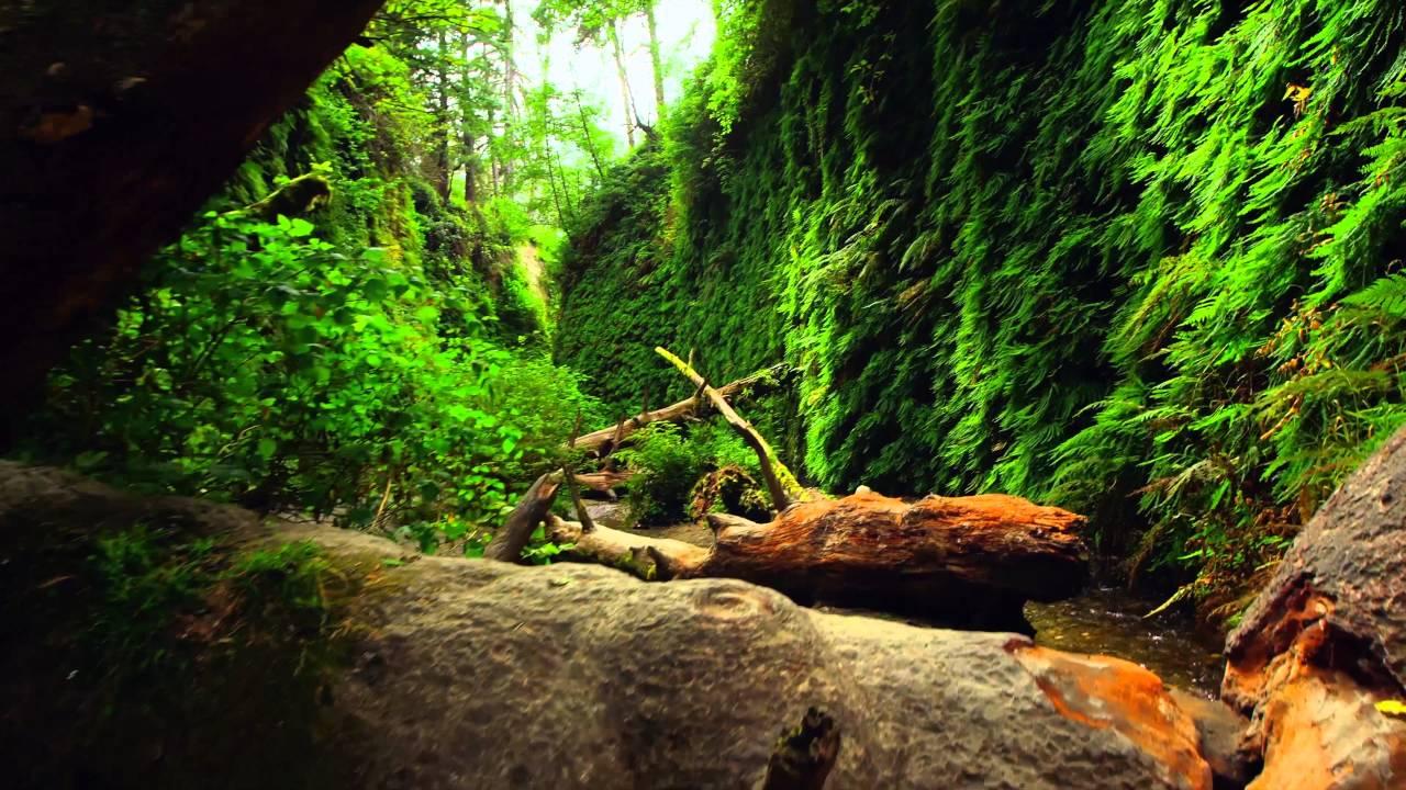 Национальный парк «Редвуд» – удивительная природа!!! качество 4К