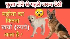 What is Monthly cost of keeping a dog // कुत्ता लेने से पहले जान लो कितना खर्चा लगेगा महीने का /