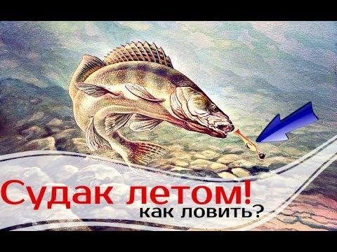 Как ловить судака летом?