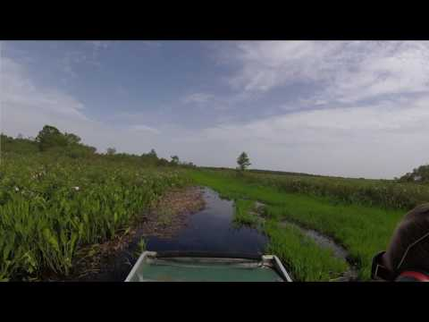Ecotec Airboat: Cypress Cruise