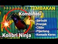 Kolibri Ninja Gacor Full Tembakan Cililin Prenjak Pijantung Kemade Serindit  Mp3 - Mp4 Download