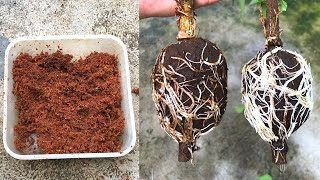 Como Propagar Flores – Extrair Flores De Hibiscus Mutabilis