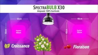 SpectraBULB X30 - Ampoule horticole LED 30W - Croissance & Floraison OSRAM