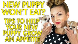 My New Puppy Won't Eat! Tips to help!   Sweetie Pie Pets by Kelly Swift