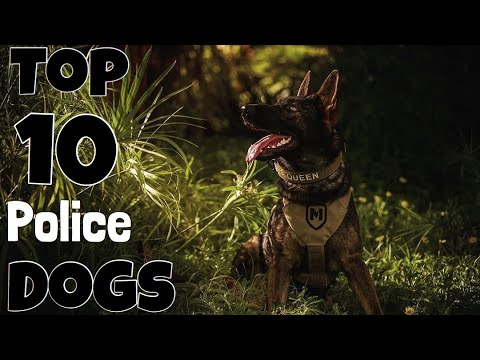 TOP 10 POLICE DOG BREEDS