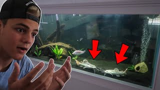 $2000 PLATINUM FISH TRANSFER to NEW AQUARIUM!!!