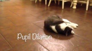 Catnip: How it works!