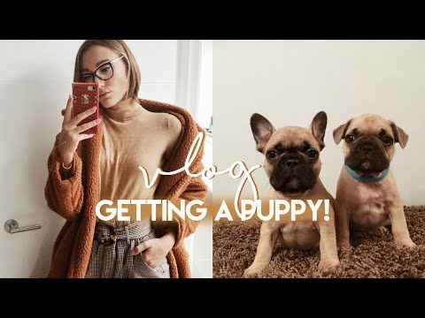 VLOG DEC: GETTING A FRENCHIE PUPPY! SHEIN CLOTHES & A NEW WORKOUT | Blaise Dyer
