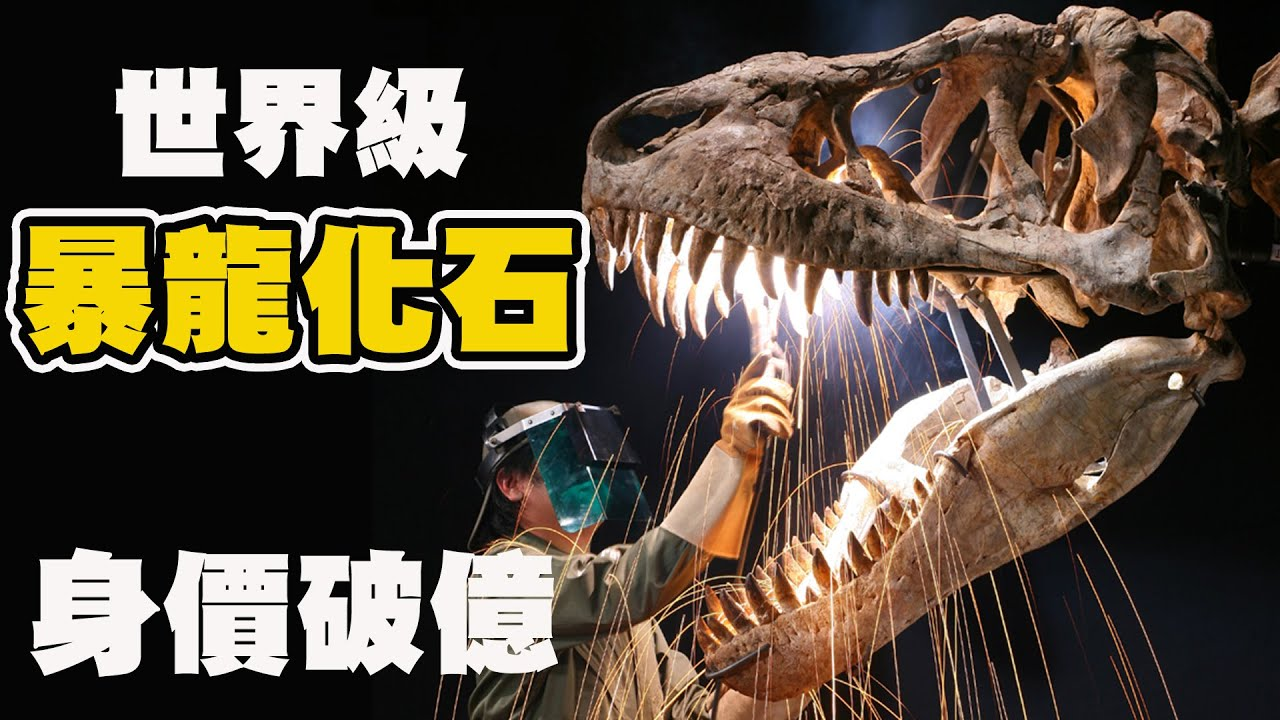台灣之光!破億巨大暴龍化石!世界頂尖古生物清修團隊 超狂博物館館藏大公開!恐龍迷的夢想!
