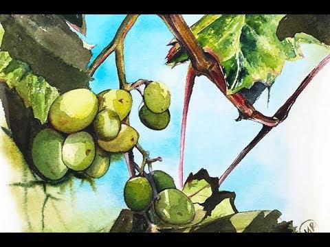 Grapes in Watercolors Painting Tutorial