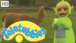 Teletubbies: Llama - Full Episode