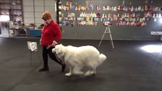 Allan Ross Dog Training