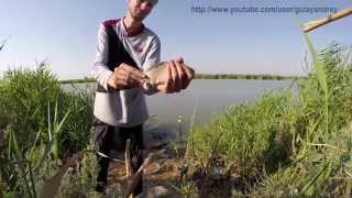 Обзор водоема для хорошей рыбалки