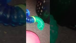 Hammy explores homemade roblox obby