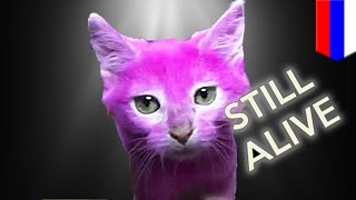 Pink cat alive! Elena Lenina may sue media who said she dyed her cat dead