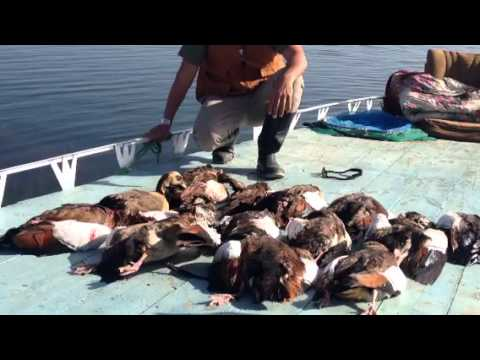 Geese hunting at naser lake egypt youtube for Lake of egypt fishing report