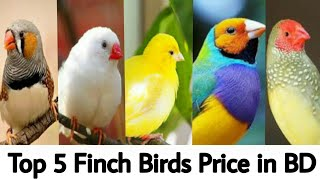 Top 5 Finch Birds NamePrice in Bangladesh