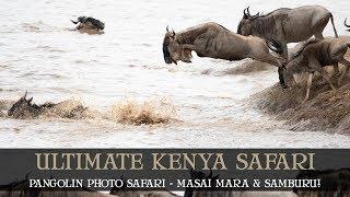 PHOTOGRAPHIC SAFARI - MASAI MARA - MIGRATION - SAMBURU - KENYA