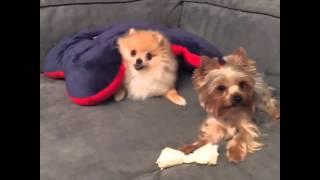 Инстаграм Дом 2 20.09.2015: Ольга Бузова и ее собаки