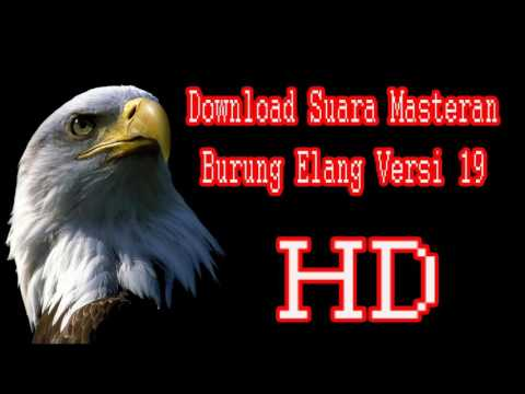 Download Suara Masteran Burung Elang Versi 19 Full HD