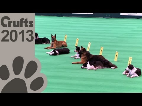 Obedience - Day 1 - Crufts 2013 (Inter-Regional: Class B)