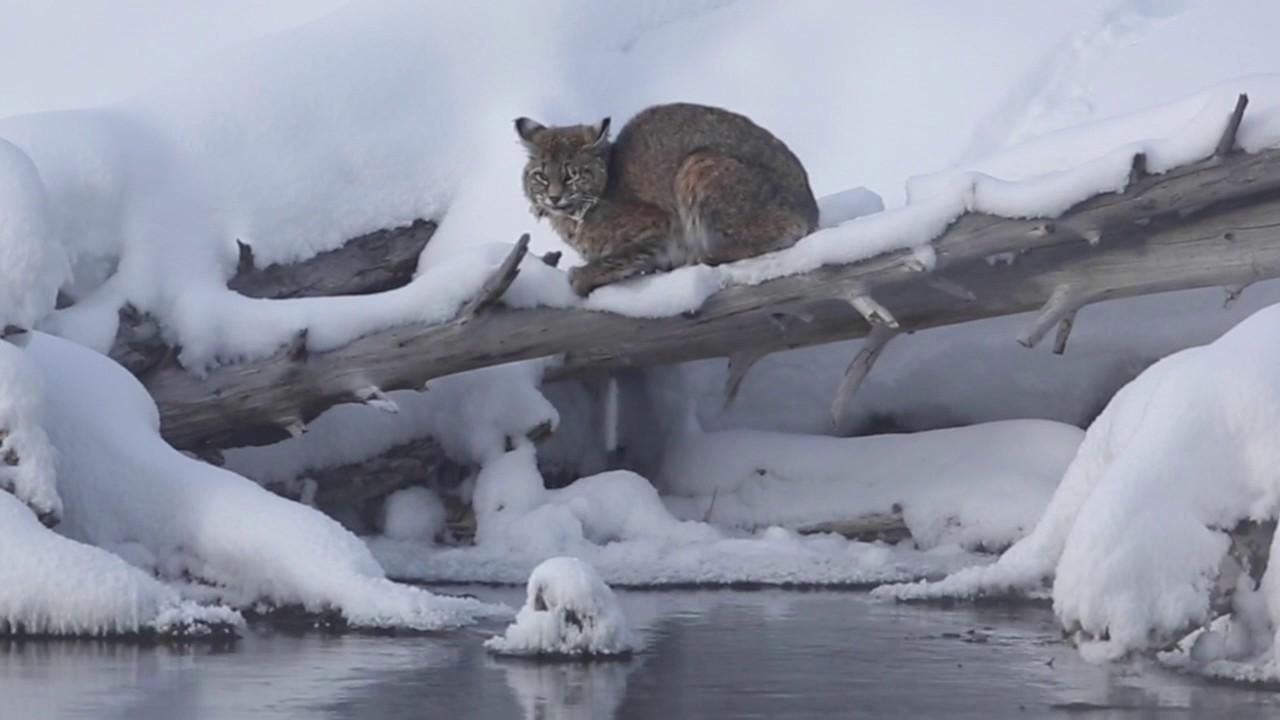 Winter Yellowstone National Park