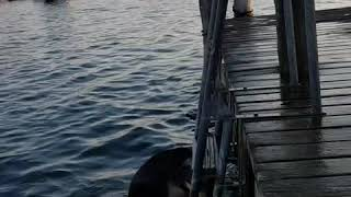 Athena 🐕.... she's got skills our dog 😎