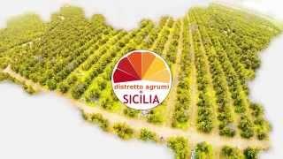 La sicilia è principale regione agrumetata d'italia, 60% della superficie totale coltivata.quattro agrumi siciliani sono a marchio dop e igp, insieme qu...