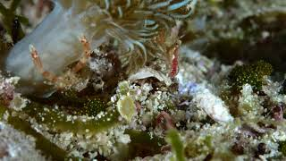 evo reef 20180719 malapascua diving