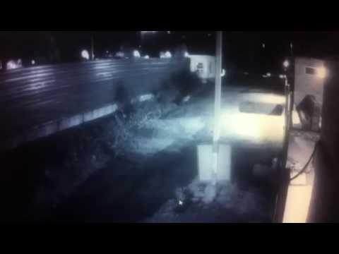 Вести: Приморье публикует новое видео тигра в пригороде Владивостока