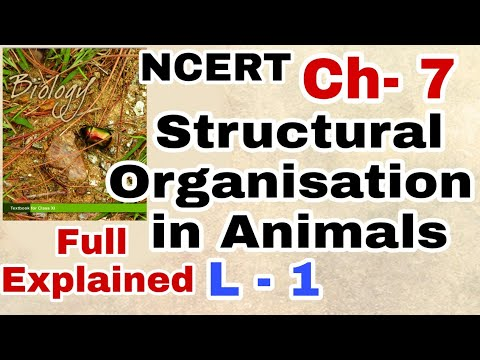 Structural Organisation in Animals (Biology) Class 11 Lecture 1 ( Animal Tissue) for NEET/AIIMS thumbnail