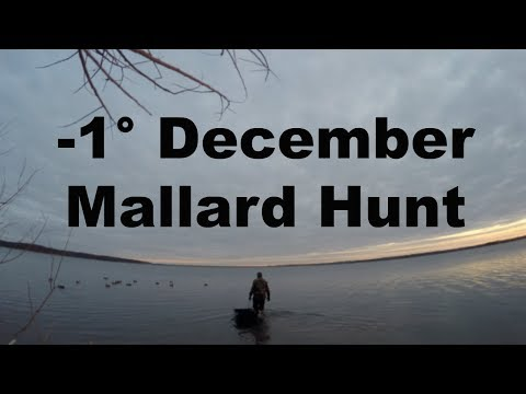 Duck Hunting: Late Season Mallards It's COLD!