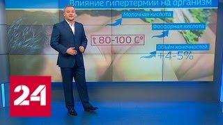 Всем составом в парилку: роль бани в большом спорте - Россия 24