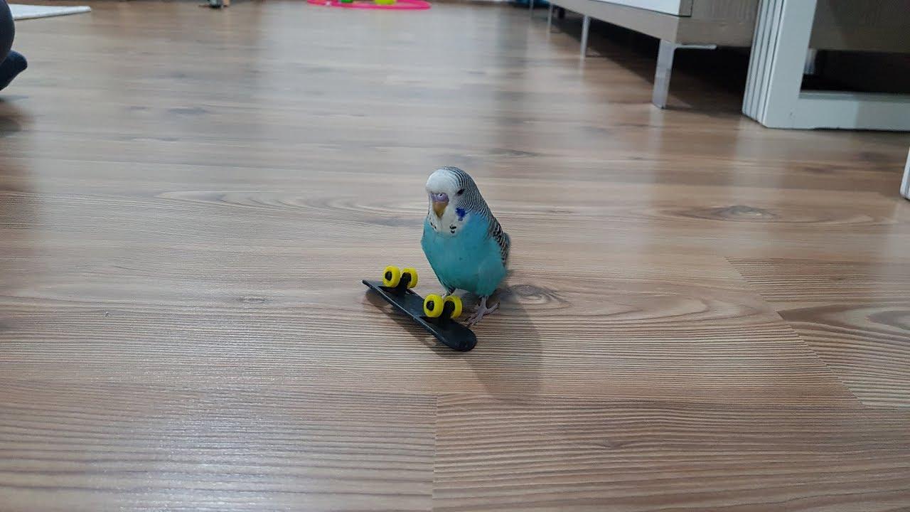 Kuş Paşa Kayboldu. Lost Bird Fun Kids Video