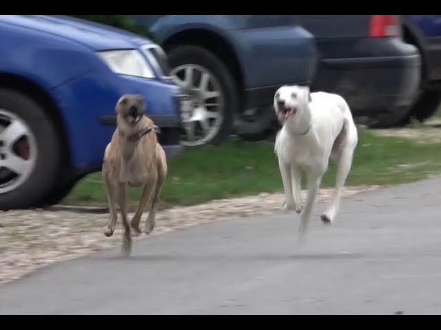 Sfaturi pentru întâlnirile cu câinii de stână | FreeRider