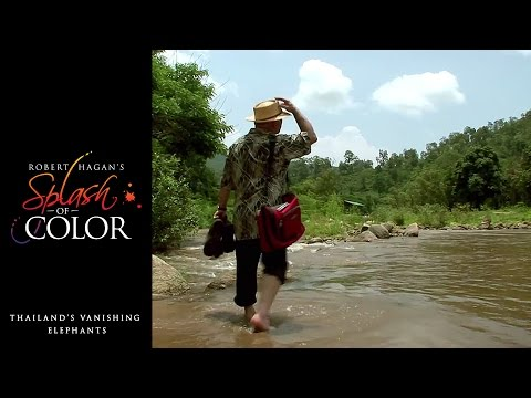 Splash Of Color - Thailand's Vanishing Elephants