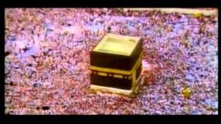 براعم الأحمدية - الحلقة 1