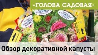 видео Декоративная капуста: сорта, выращивание рассады, уход